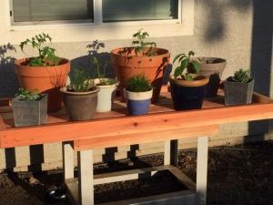 Cindy's container garden