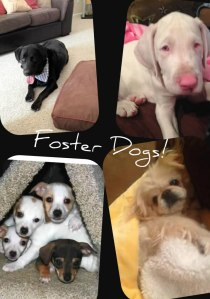 A few of Joelle's foster dogs
